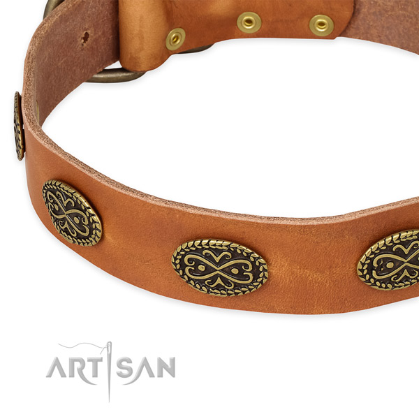 Studded genuine leather collar for your handsome dog
