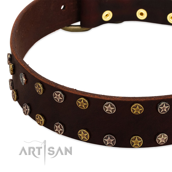 Everyday walking full grain leather dog collar with trendy embellishments
