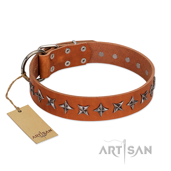 Everyday use dog collar of top notch full grain natural leather with studs