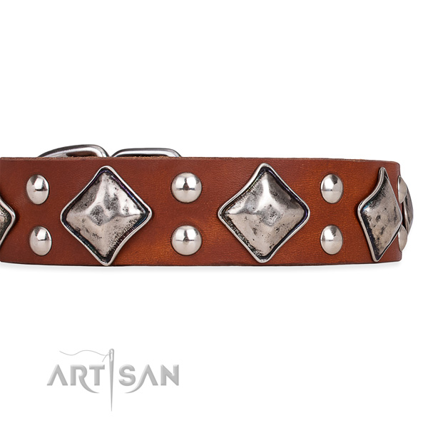 Full grain natural leather dog collar with significant durable adornments