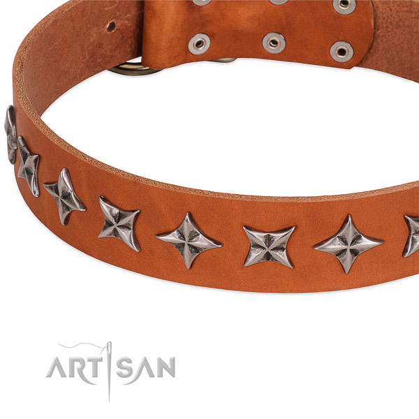 Everyday walking adorned dog collar of top quality full grain natural leather
