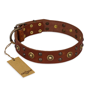 """Unfailing Charm"" FDT Artisan Studded Tan Leather Great Dane Collar"