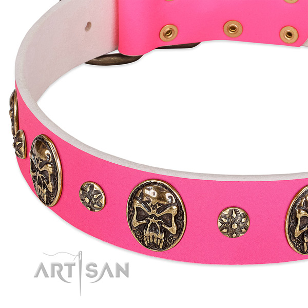 Exceptional dog collar made for your impressive dog