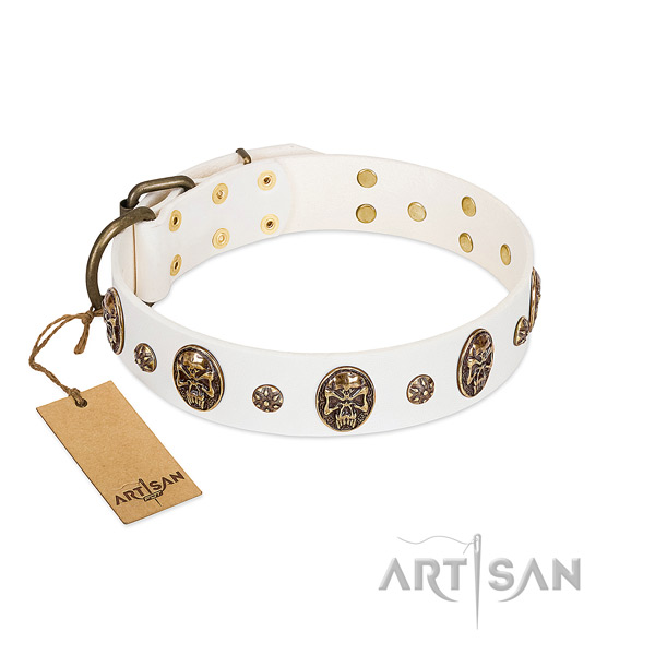 Studded genuine leather collar for your four-legged friend