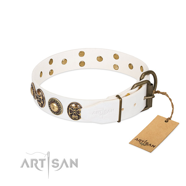 Rust-proof studs on walking dog collar