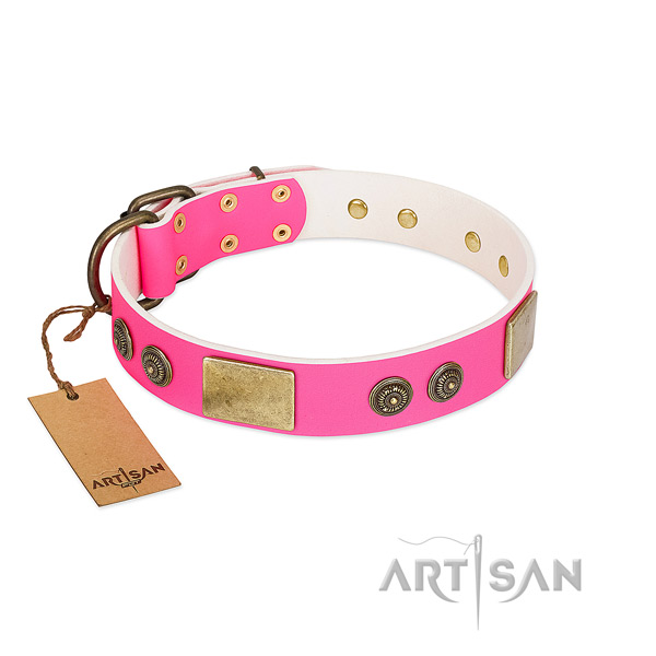 Top quality full grain leather dog collar for everyday walking