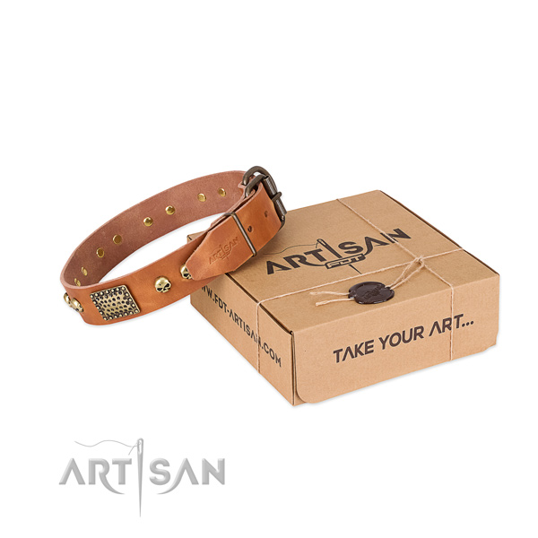 Reliable adornments on dog collar for everyday walking