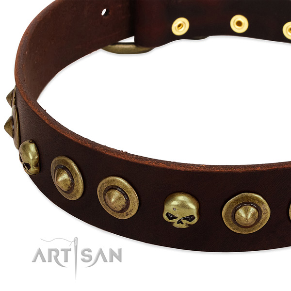 Designer studs on genuine leather collar for your doggie