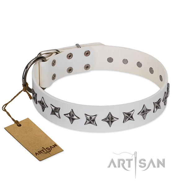 Everyday use dog collar of top quality full grain leather with adornments