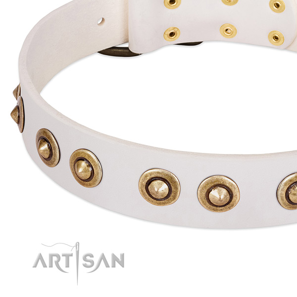 Corrosion resistant studs on leather dog collar for your dog