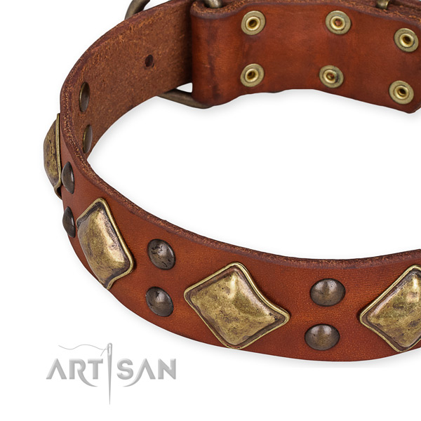 Full grain leather collar with corrosion resistant fittings for your handsome doggie
