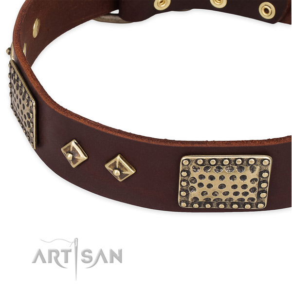 Corrosion resistant studs on genuine leather dog collar for your dog
