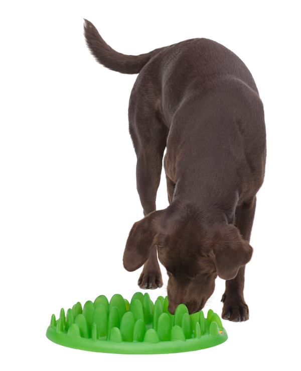 Effective Great Dane Feeder