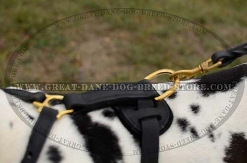D-ring of Great Dane Harness