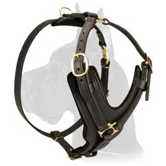 Safe Great Dane Dog Harness