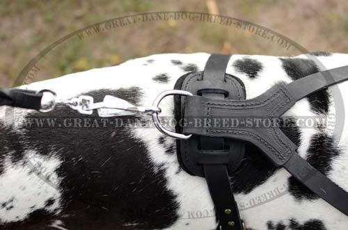 Exclusive Great Dane Breed Leather Harness