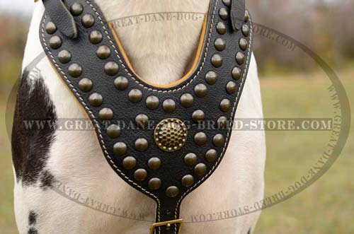 Great Dane Dog Harness with brass fittings