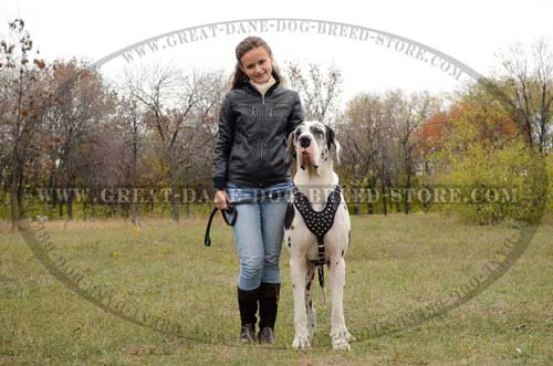 Popular Great Dane Dog Leather Harness