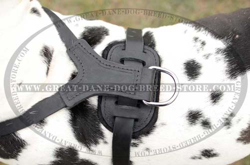 Exclusive Great Dane Leather Harness