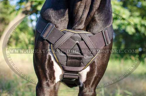 Great Dane Nylon Harness with cozy plate