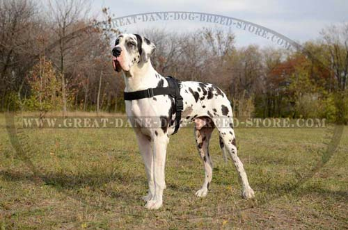 Comfortable Great Dane Nylon Harness