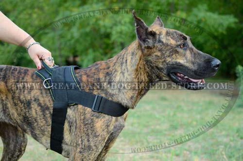 Durable Great Dane Nylon Harness