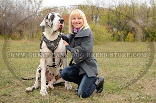 Great-Dane-Dog-Harness-With-Stylish-Design