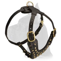 Fashionable Great Dane Leather Harness