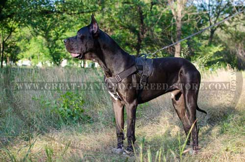 Light weight Great Dane Breed Nylon Harness