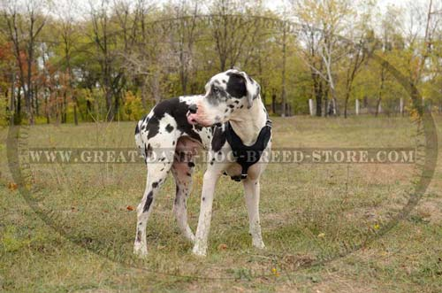 Comfortable Great Dane Dog Leather Harness