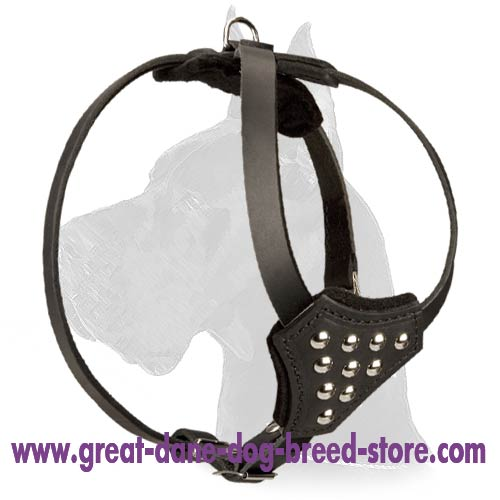 Leather Harness with studs to walk Great Dane puppy