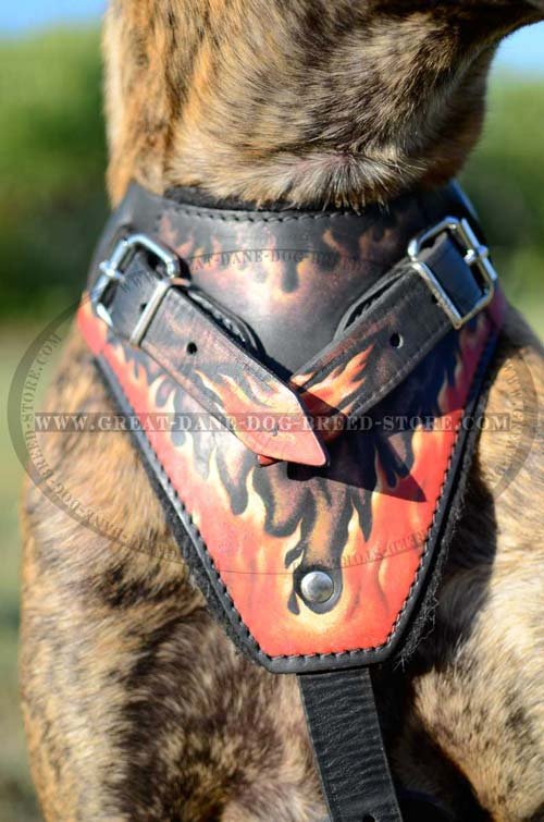 Chest Plate of Leather Great Dane Harness
