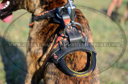 Durable Handle of Leather Great Dane Harness
