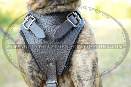 Soft Leather Harness