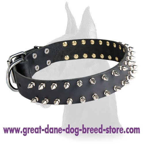 Leather Spiked Great Dane Collar - Click Image to Close