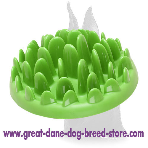 Small Interactive Great Dane Feeder for wet and dry food
