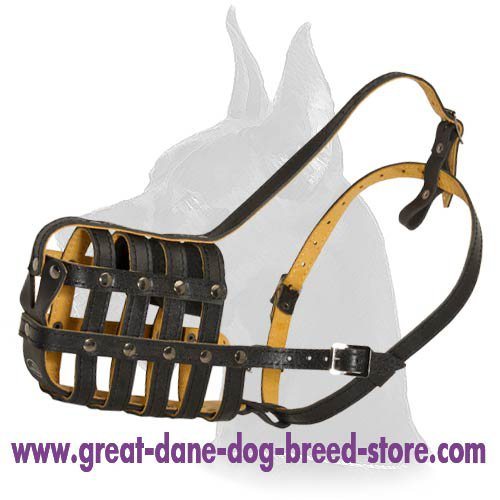 Royal Leather Muzzle for Great Dane
