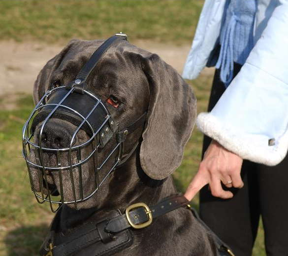 Gerat Dane wire basket dog muzzle