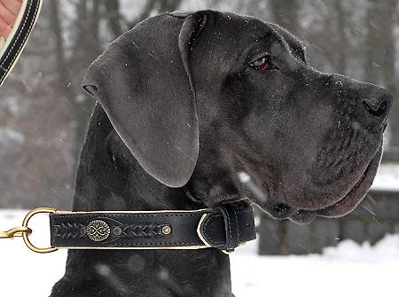 Leather dog collar for Great Dane