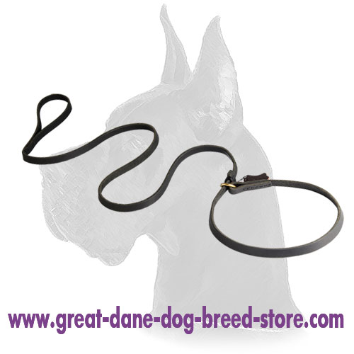 Choke Collar of Leather Dog Leash Combo