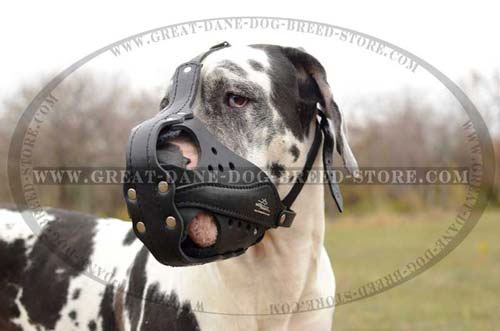 Riveted Great Dane Leather Muzzle