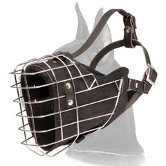 Great Dane Muzzle for Attack Training
