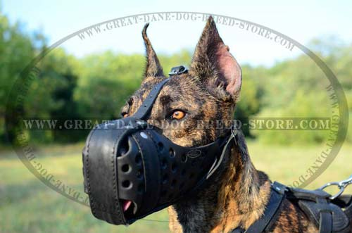 Dane Training Muzzle