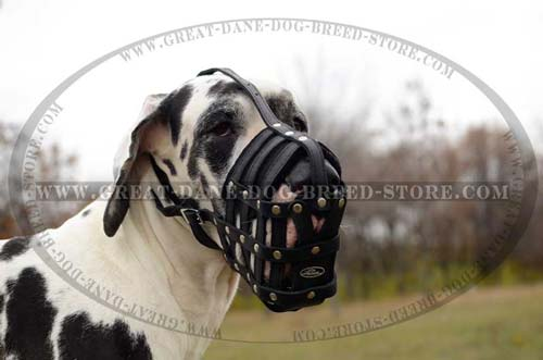 Non-toxic Great Dane Dog Muzzle